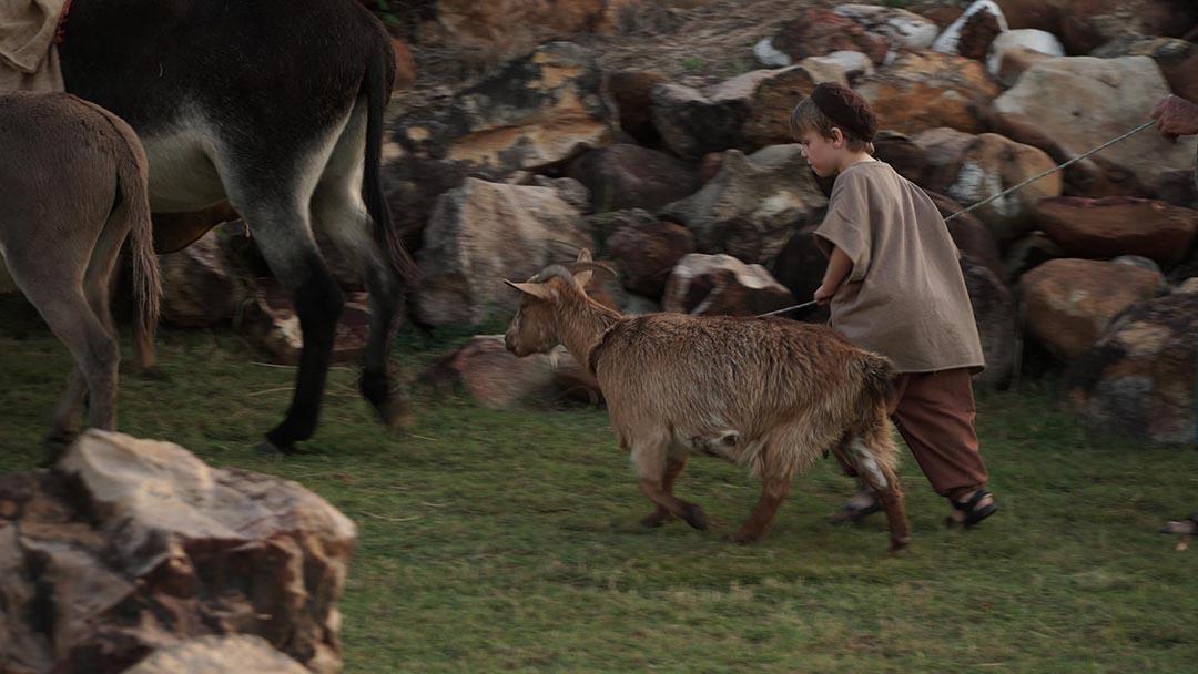 Goat-donkeys